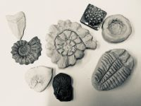 fossil, workshop, childrens, clay, swindon
